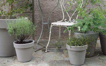 Coltivare arbusti in vaso