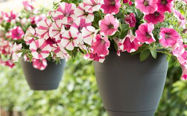 Designing a hanging garden: practical style tips