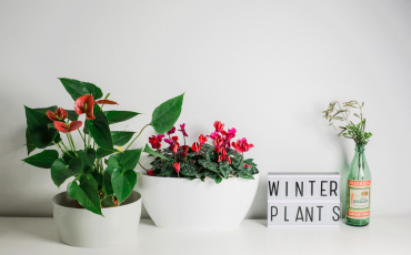 Christmas time: let's discover all the plants and flowers in blossom!