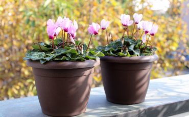 HOW TO TAKE CARE OF YOUR GARDEN IN NOVEMBER