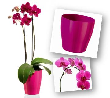 composizione_orchidea_360x320