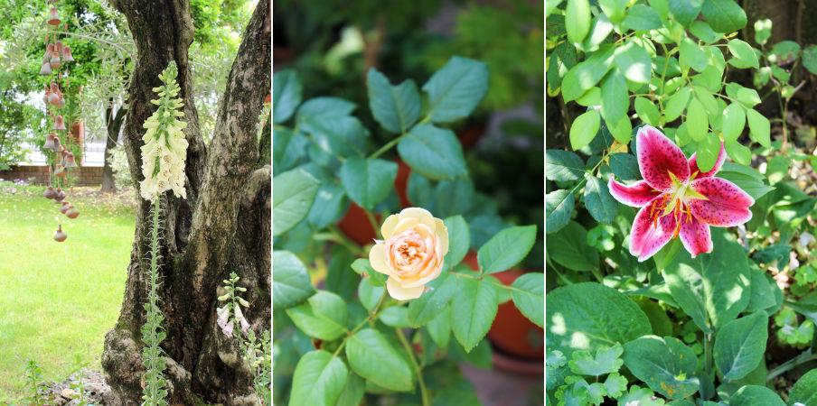 giardino_estate_1