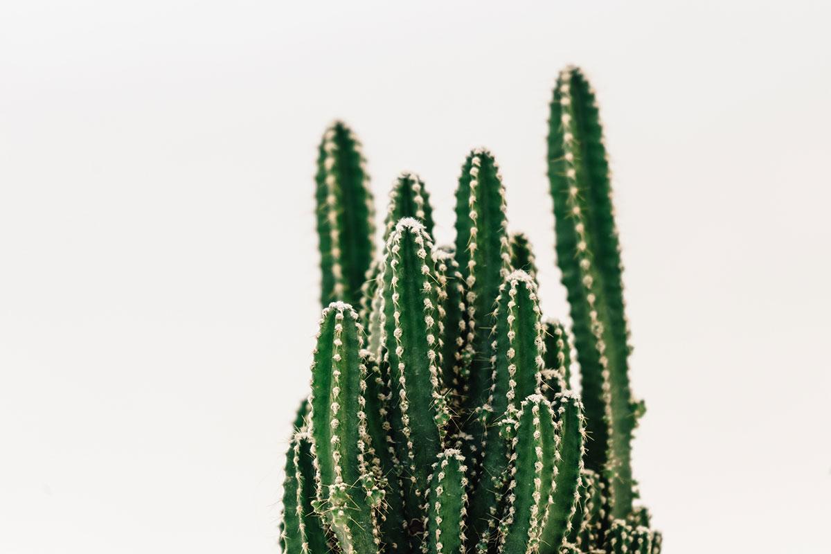cactus cure